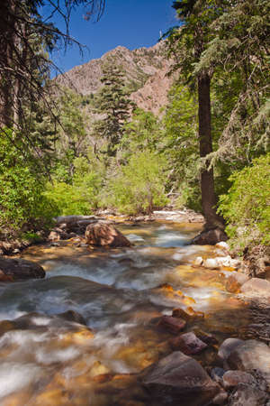 wasatch: A close up of Big Cottonwood Creek in the Wasatch Mountains on a cool July morning