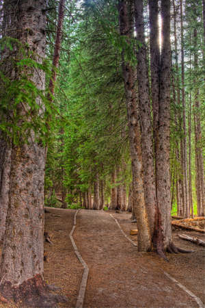 wasatch: A hiking trail through the Wasatch Mountains