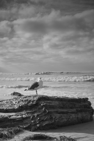 seagull: A wide shot looking out to the Pacific Ocean on a cool cloudy day at Crystal Cove Beach