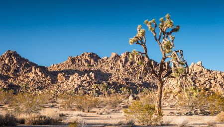 A shot looking into Joshua Tree National Park. Stock Photo - 19238208