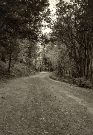 tonto national forest: A sepia shot of a fire road in Tonto National Forest during sunset  Stock Photo