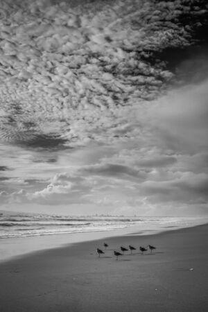 Un coup de noir et de blanc à partir de Sunset Beach avec sept bécasseau oiseaux au premier plan.