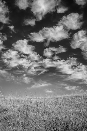 A black and white shot of wild dry brush on a hill with bright white clouds in the background.