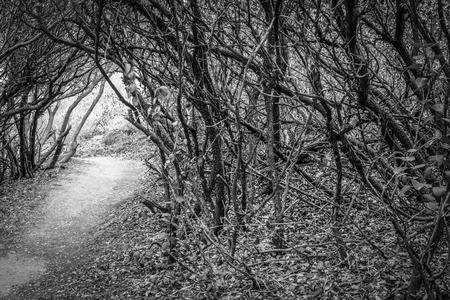 Een zwart-wit foto van een bos van dode takken koof een wandel- proef