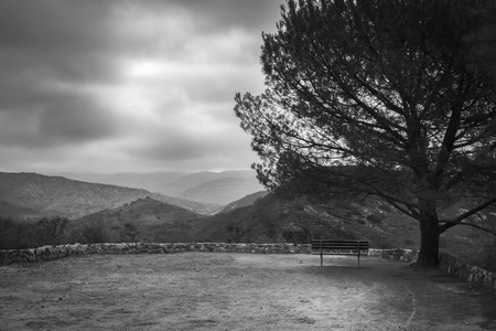 A black and white shot of a empty bench under a tall pine tree