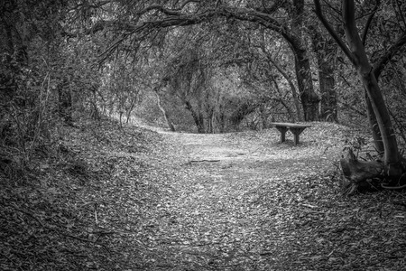 A black and white shot of a empty bench on the edge of a hiking trail