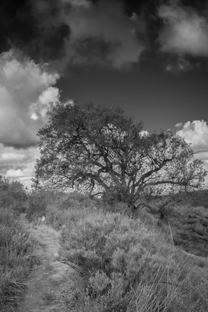 A black and white shot of a lone tree on a hillside with big white clouds in the background