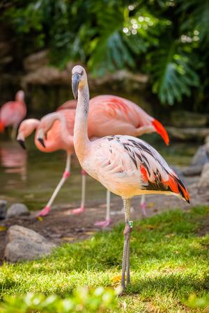 A close up shot of a flamingo