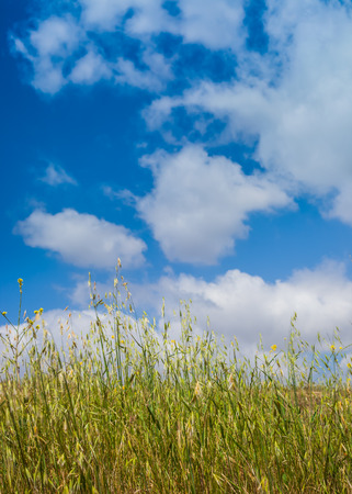 A close up shot of a grass field with a cloudy blue sky  Banque d'images