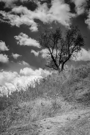 A black and white shot of a black tree on hillside with a cloudy sky