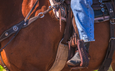 animal body part: A close up of a cowboy
