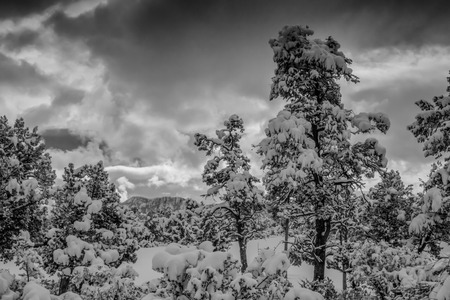 A black and white shot looking out through trees to the Granite Dells in Payson Arizona just after a winter snow storm.