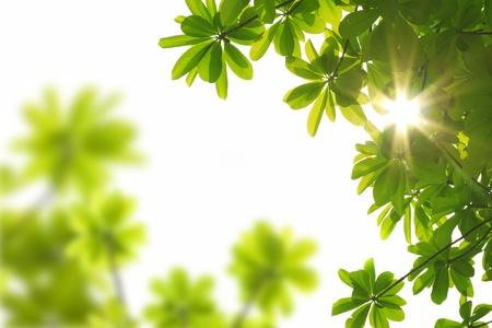 bladeren: natuur voorjaar achtergrond met sun beam  Stockfoto