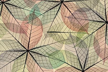 Skeleton leaf abstract  photo