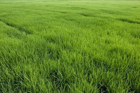 봄 그린 잔디