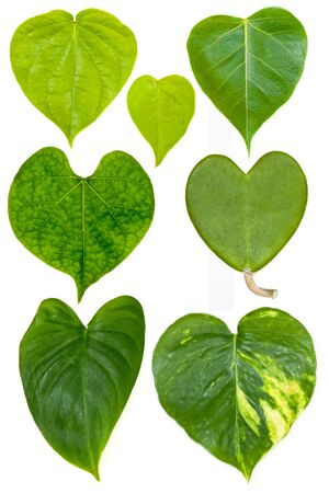 collection of heart shape leafs isolated  Фото со стока