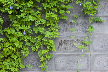 green vine on a wall
