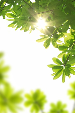 sun beams and green leaves  photo