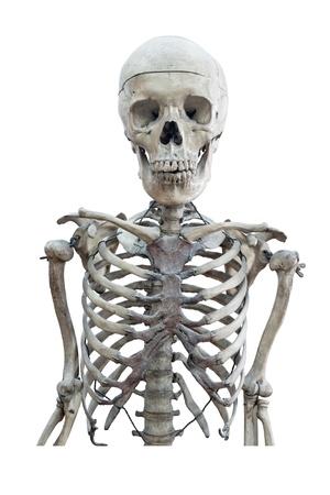 human skeleton: Esqueleto humano médico aislado