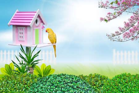 maison oiseau: maison d'oiseau et le perroquet jaune Banque d'images