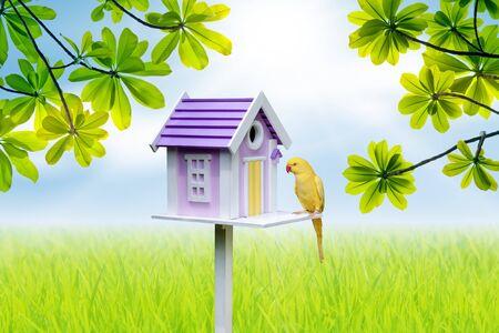 bird house and yellow parrot  Фото со стока