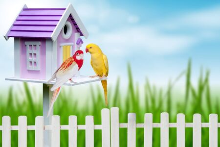 bird house: bird house and two parrots