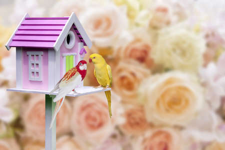 the two parrots: bird house and two parrots