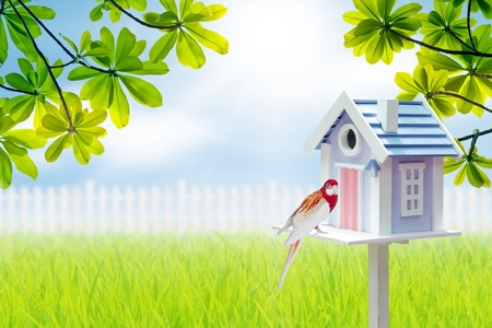 bird house and parrot  photo