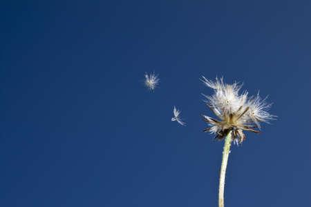 weed flower  photo