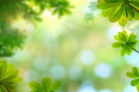 nature spring background  Stock Photo