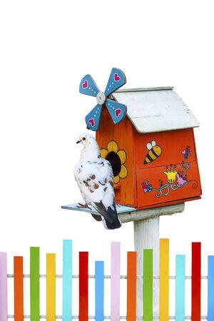 maison oiseau: Maison d'oiseau en bois et le pigeon isol� sur fond blanc