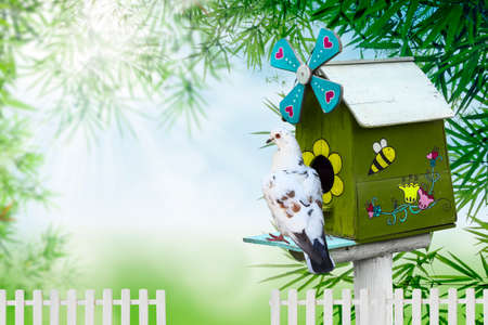 maison oiseau: Maison d'oiseau en bois et le pigeon