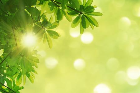 nature spring background photo