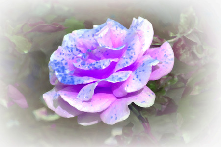photo real: rose flower oil paint , photoshop filter effect created from real photo Stock Photo