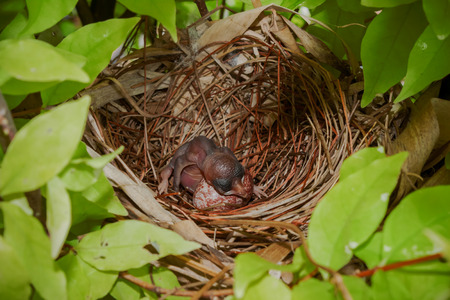 home birth: Newborn hungry baby bird in nest Stock Photo