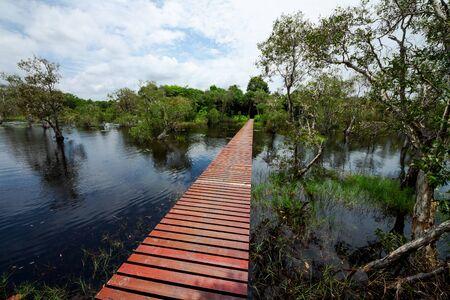 wetland: Wetland in Rayong Botanical garden, Thailand  Melaleuca or Paper bark tree forest