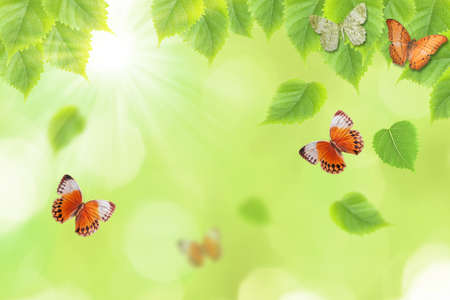 green butterfly: butterfly and fresh green leaves background