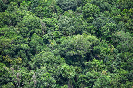 tropical evergreen forest: rain forest background