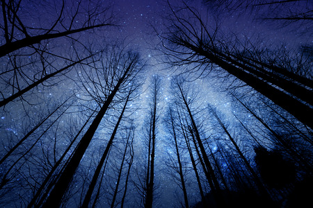 perspective silhouette of dry tree in the night with starry sky on background Stock Photo