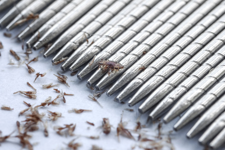 macro of lice and eggs removing by standless lice comb