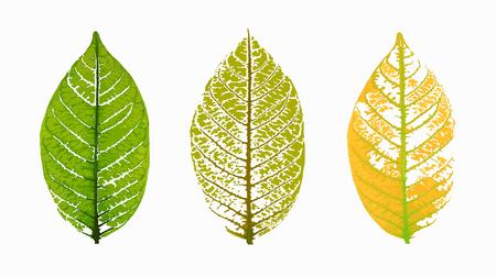 skeleton leaves isolated on white background, vector illustration eps10 Ilustração
