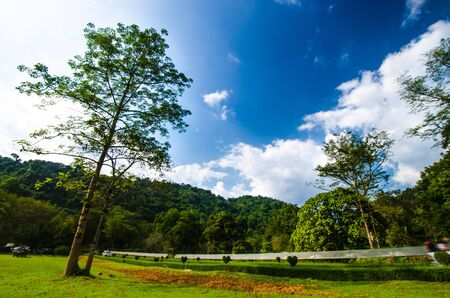 clound: This is an amazing nature  blue sky , big tree , green grass , white clound
