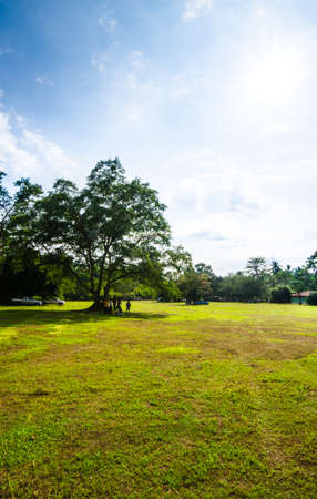 clound: This is a green grass with big tree