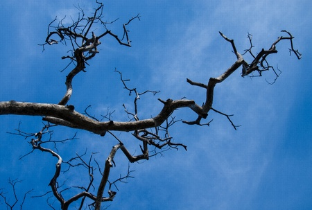 This's a branch with the blue sky Stock Photo - 16872127