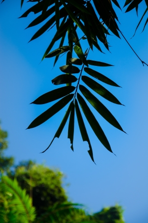 This is a leaf with bluesky. photo