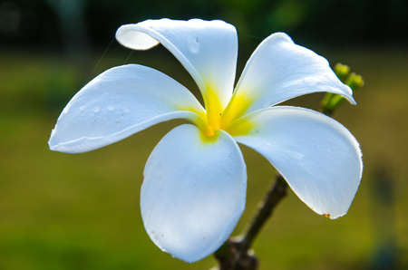 good feeling: A white flower , fresh , good feeling , happy