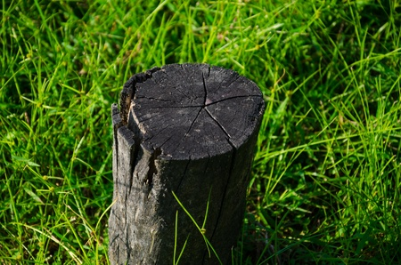 Old wood with green grass photo