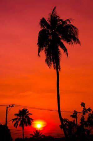 Silhouette coconut with sunset. photo