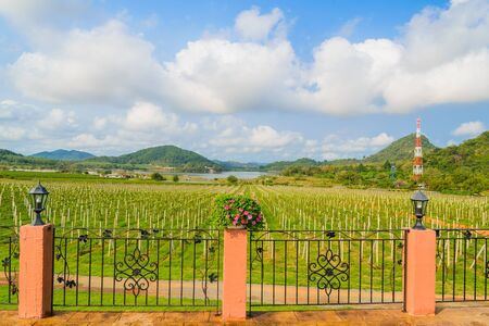 Grape valley in chonburi province (Thailand) photo