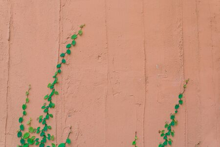 Brick wall with leaf frame photo